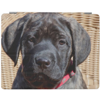 USA, California. Mastiff puppy looking at you. iPad Cover