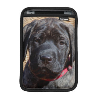 USA, California. Mastiff puppy looking at you. iPad Mini Sleeve