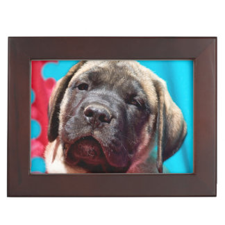 USA, California. Mastiff Puppy Looking At You Keepsake Box