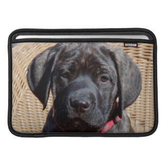 USA, California. Mastiff puppy looking at you. MacBook Sleeve