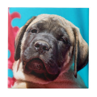 USA, California. Mastiff Puppy Looking At You Tile