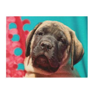 USA, California. Mastiff Puppy Looking At You Wood Wall Decor