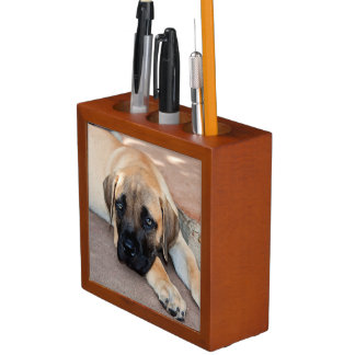 USA, California. Mastiff Puppy Lying On Cement Desk Organiser