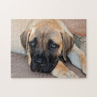 USA, California. Mastiff Puppy Lying On Cement Jigsaw Puzzle