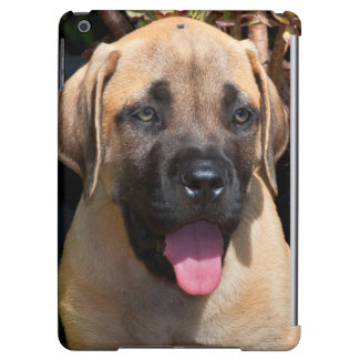 USA, California. Mastiff Puppy Portrait