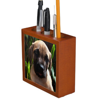 USA, California. Mastiff Puppy Portrait 2 Desk Organiser