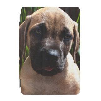 USA, California. Mastiff Puppy Portrait 2 iPad Mini Cover