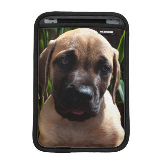 USA, California. Mastiff Puppy Portrait 2 iPad Mini Sleeve