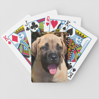 USA, California. Mastiff Puppy Portrait Bicycle Playing Cards