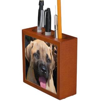 USA, California. Mastiff Puppy Portrait Desk Organiser