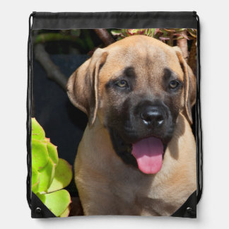 USA, California. Mastiff Puppy Portrait Drawstring Bag