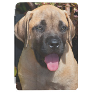 USA, California. Mastiff Puppy Portrait iPad Air Cover