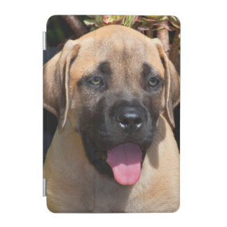 USA, California. Mastiff Puppy Portrait iPad Mini Cover