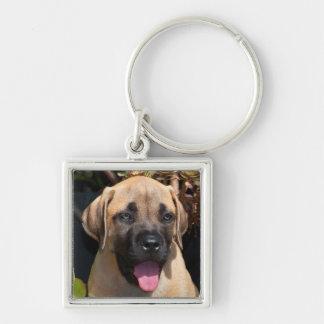 USA, California. Mastiff Puppy Portrait Key Ring