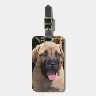 USA, California. Mastiff Puppy Portrait Luggage Tag