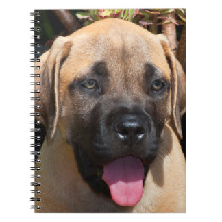 USA, California. Mastiff Puppy Portrait Notebook