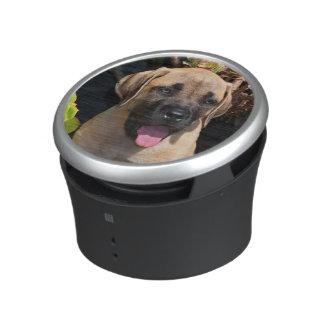 USA, California. Mastiff Puppy Portrait Speaker