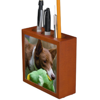 USA, California. Mcnab Shepherd At Play Desk Organiser