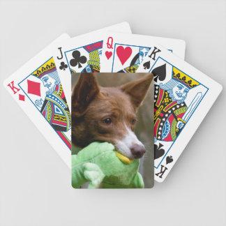 USA, California. Mcnab Shepherd At Play Poker Deck