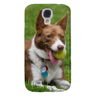 USA, California. Mcnab Shepherd Waiting Galaxy S4 Case