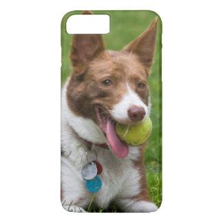 USA, California. Mcnab Shepherd Waiting iPhone 8 Plus/7 Plus Case