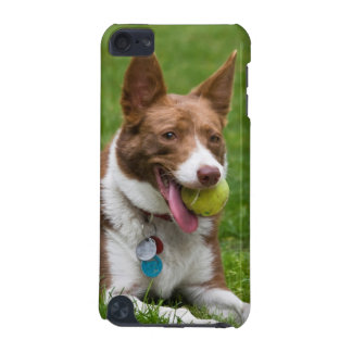 USA, California. Mcnab Shepherd Waiting iPod Touch 5G Case
