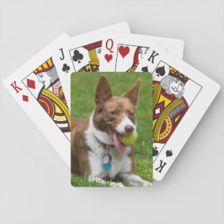 USA, California. Mcnab Shepherd Waiting Poker Deck