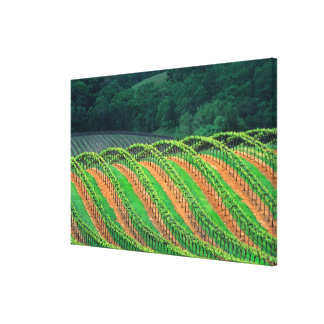 USA, California, Mendocino County, a trellised Stretched Canvas Prints