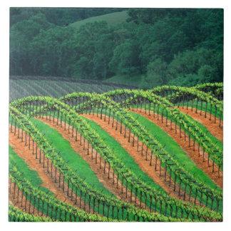 USA, California, Mendocino County, a trellised Tile