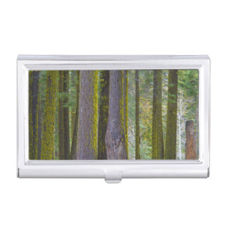 USA, California. Moss Covered Tree Trunks Business Card Holder