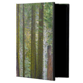 USA, California. Moss Covered Tree Trunks Case For iPad Air