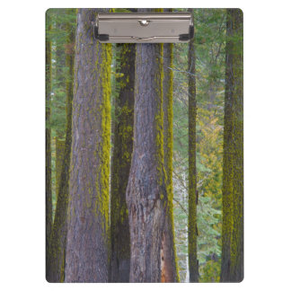 USA, California. Moss Covered Tree Trunks Clipboard