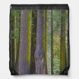USA, California. Moss Covered Tree Trunks Drawstring Bag