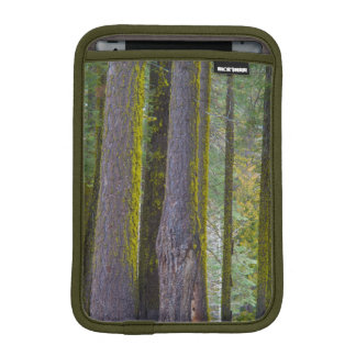 USA, California. Moss Covered Tree Trunks iPad Mini Sleeve