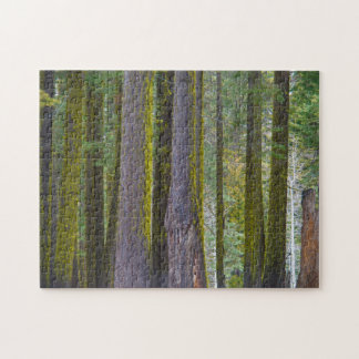 USA, California. Moss Covered Tree Trunks Jigsaw Puzzle