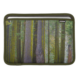 USA, California. Moss Covered Tree Trunks Sleeve For MacBook Air