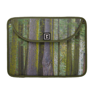 USA, California. Moss Covered Tree Trunks Sleeve For MacBook Pro