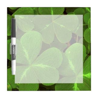 USA, California, Muir Woods. Close-up of clover Dry Erase Board
