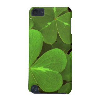 USA, California, Muir Woods. Close-up of clover iPod Touch (5th Generation) Cases