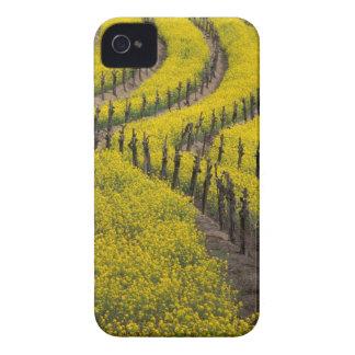 USA, California, Napa Valley, Los Carneros Ava. iPhone 4 Case-Mate Cases