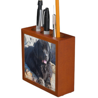 USA, California. Newfoundland Lying Desk Organiser