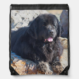 USA, California. Newfoundland Lying Drawstring Bag