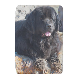 USA, California. Newfoundland Lying iPad Mini Cover