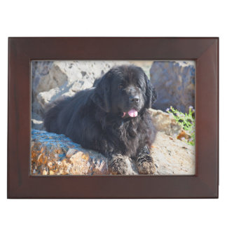 USA, California. Newfoundland Lying Keepsake Box