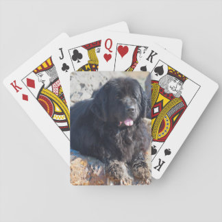 USA, California. Newfoundland Lying Playing Cards