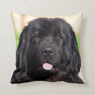 USA, California. Newfoundland Portrait Cushion