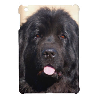 USA, California. Newfoundland Portrait iPad Mini Case