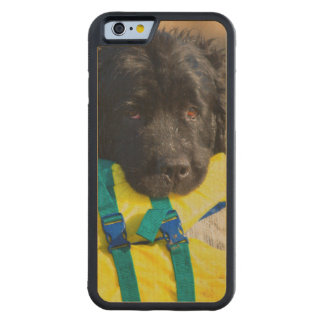 USA, California. Newfoundland With Life Vest Carved® Maple iPhone 6 Bumper Case