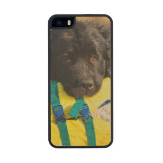 USA, California. Newfoundland With Life Vest Carved® Maple iPhone 5 Slim Case