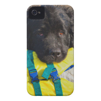 USA, California. Newfoundland With Life Vest iPhone 4 Case-Mate Case